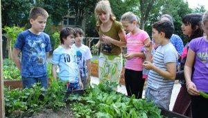 Tanóra a közösségi kertben
